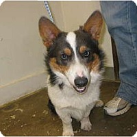 Adopt A Pet :: Cooper - Inola, OK