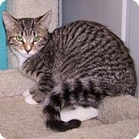 Adopt A Pet :: K-Emery1-Miranda - Colorado Springs, CO