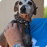 Adopt A Pet :: Pharaoh - Costa Mesa, CA
