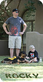 Rottweiler Dog for adoption in Gilbert, Arizona - Rocky