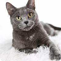 Adopt A Pet :: April - Eagan, MN