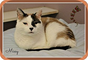 Calico Cat for adoption in New Richmond,, Wisconsin - Missy