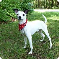 Adopt A Pet :: Ace - Mocksville, NC