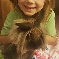 Adopt A Pet :: Delilah - Aurora, IL