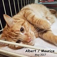 Adopt A Pet :: Albert / Maurice - Oklahoma City, OK