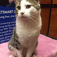 Adopt A Pet :: Negan - Stanhope, NJ