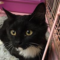 Adopt A Pet :: Onxy - Whittier, CA