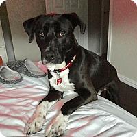 Adopt A Pet :: Arnie - Valley Village, CA