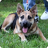 Adopt A Pet :: Zack Morris~adopted! - Glastonbury, CT