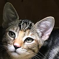 Adopt A Pet :: Mao Mao - Auburn, CA