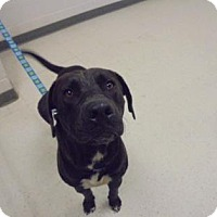 Adopt A Pet :: Barton - Lonely Heart - Gulfport, MS
