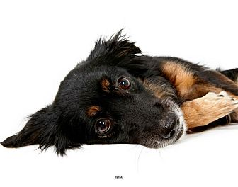 Collie Mix Dog for adoption in New York, New York - Nina