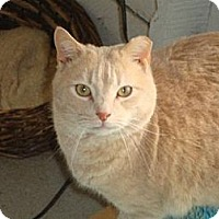Adopt A Pet :: SHIMMER - Harrisburg, PA