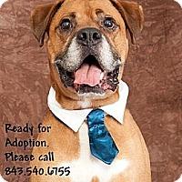 Adopt A Pet :: ROMEO - Okatie, SC