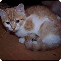 Adopt A Pet :: Spencer - Richmond, VA