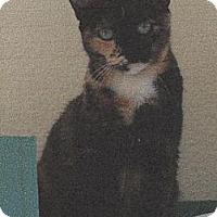 Adopt A Pet :: Juliet - El Cajon, CA