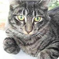 Adopt A Pet :: Stumpy McGuire - Duncan, BC