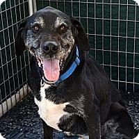 Adopt A Pet :: Zack - Acton, CA