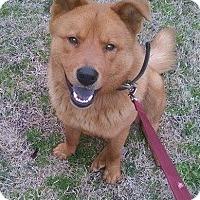 Adopt A Pet :: Buddy - Natchitoches, LA