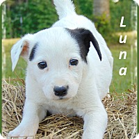 Adopt A Pet :: Luna - Marlborough, MA