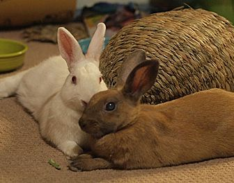 Other/Unknown Mix for adoption in Tustin, California - Peanut and Duchess