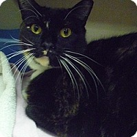 Adopt A Pet :: Bernadette - Hamburg, NY