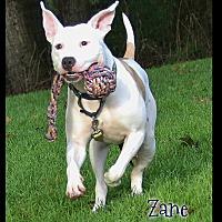 Adopt A Pet :: Zane - Shippenville, PA