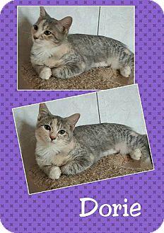 Domestic Shorthair Kitten for adoption in North Richland Hills, Texas - Dorie