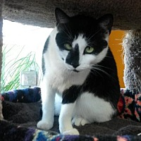 Adopt A Pet :: Zoe - Eugene, OR