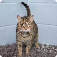 Adopt A Pet :: Lylee Bug - Waynesboro, PA