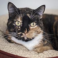 Adopt A Pet :: Momo - St Helena, CA