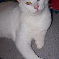Adopt A Pet :: Chris - Ashland, VA