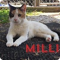 Adopt A Pet :: Millie - Spring Lake, NJ