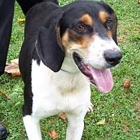 Adopt A Pet :: Sport - Metamora, IN