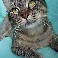 Adopt A Pet :: Paisley - Hornell, NY