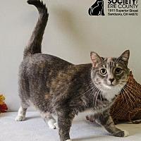 Adopt A Pet :: SUGAR - Sandusky, OH