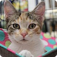 Adopt A Pet :: Queenie - Santa Monica, CA