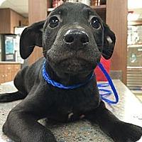 Adopt A Pet :: Jack Frost - Cumming, GA