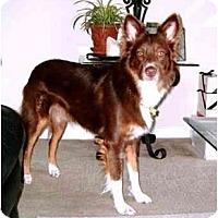 Adopt A Pet :: Bayle - Orlando, FL