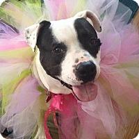 Adopt A Pet :: Valentine - Fenton, MI