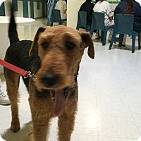 Adopt A Pet :: Jacks - Lockhart, TX