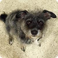 Adopt A Pet :: Django - Los Angeles, CA