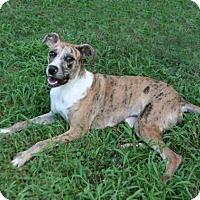 Adopt A Pet :: Foxy - Lufkin, TX