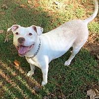 Adopt A Pet :: Jazzie - Loganville, GA