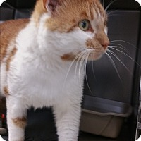 Adopt A Pet :: Bandit - Chippewa Falls, WI