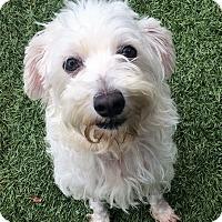 Adopt A Pet :: Madison - Chula Vista, CA
