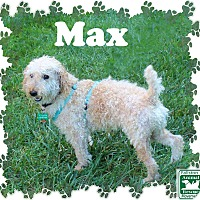 Adopt A Pet :: Max - Fallston, MD