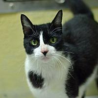 Adopt A Pet :: 10311667 - Brooksville, FL
