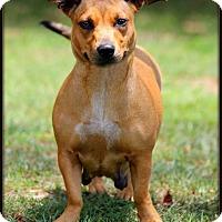 Adopt A Pet :: Lucy - Dixon, KY