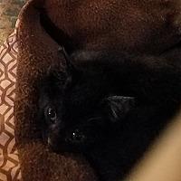 Adopt A Pet :: Cora - Geneseo, IL